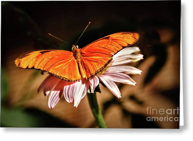 Julia Butterfly Greeting Card by Robert Bales