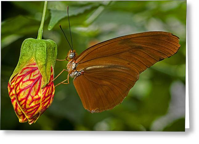 Julia Longwing Butterfly Greeting Card