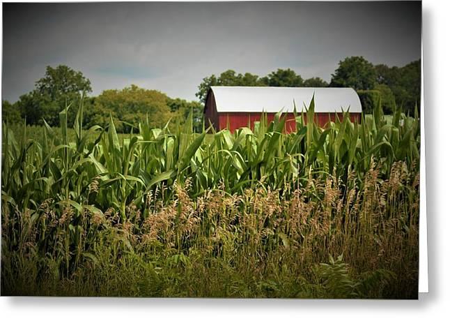 0020 - July Corn Greeting Card