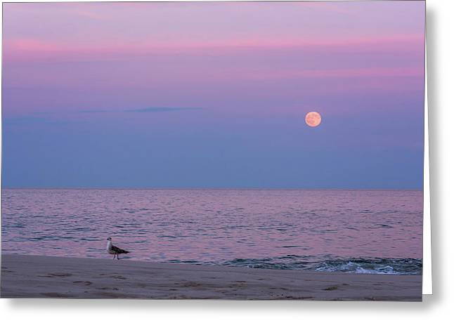 July Full Moon 2016 Lavallette Nj Greeting Card by Terry DeLuco