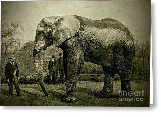 Jumbo The Elepant Circa 1890 Greeting Card by Peter Gumaer Ogden
