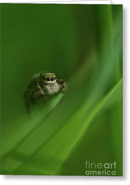 Jumping Spider Contemplating Life Greeting Card