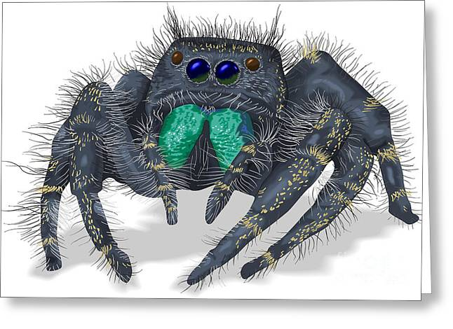 Jumping Spider Greeting Card by Mark Giles