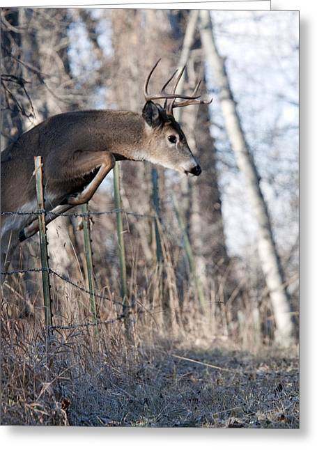 Jumping White-tail Buck Greeting Card