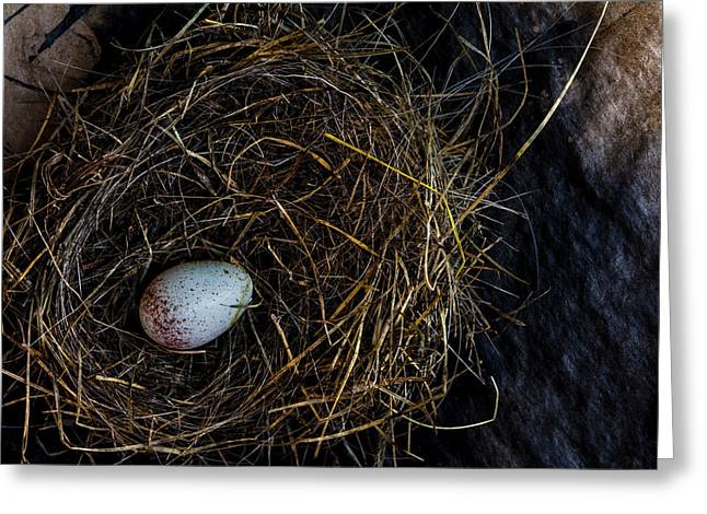 Junco Bird Nest And Egg Greeting Card