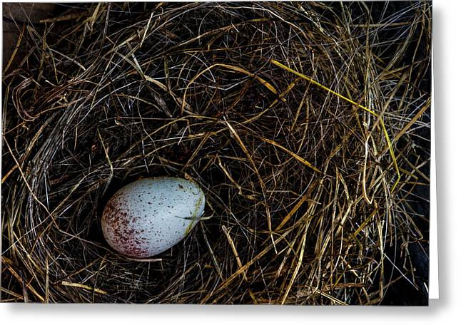 Junco Bird Nest And Egg Square Version Greeting Card