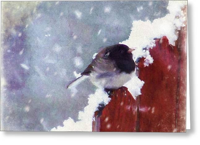 Junco In The Snow, Square Greeting Card