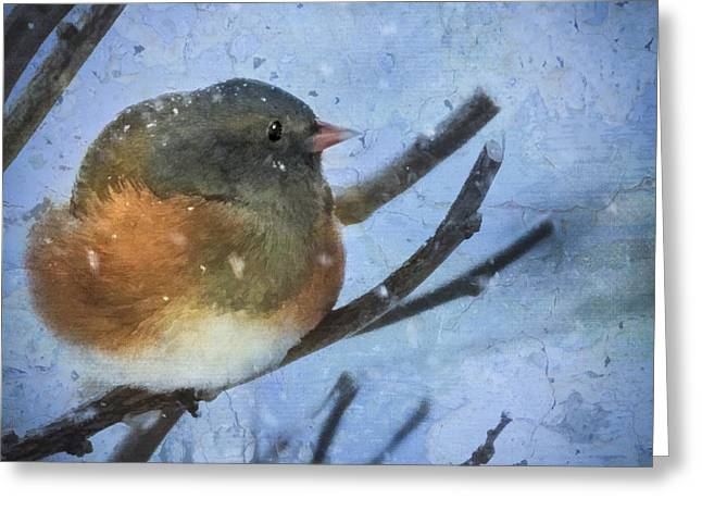 Junco On Winter Day Greeting Card