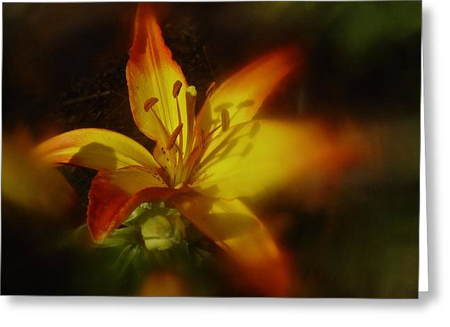 June 2016 Lily Greeting Card by Richard Cummings