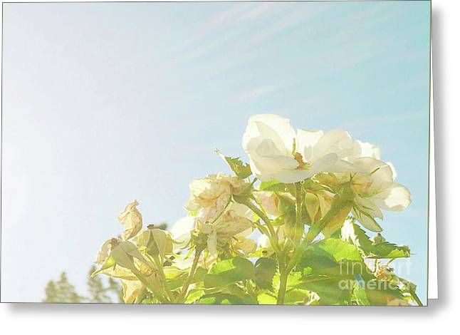 Greeting Card featuring the photograph June Heatwave by Cindy Garber Iverson