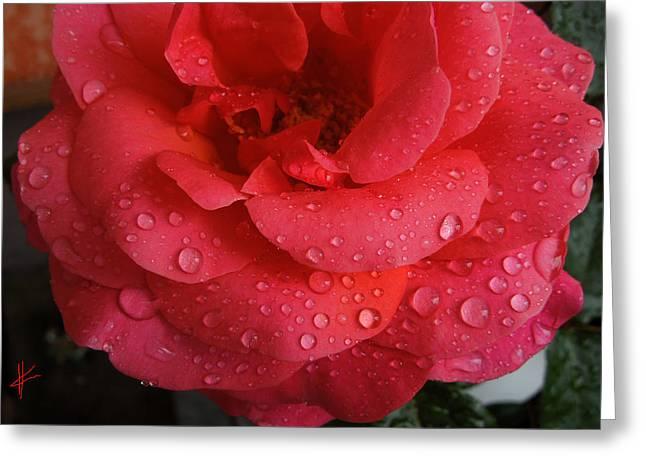 June  Rose  Greeting Card