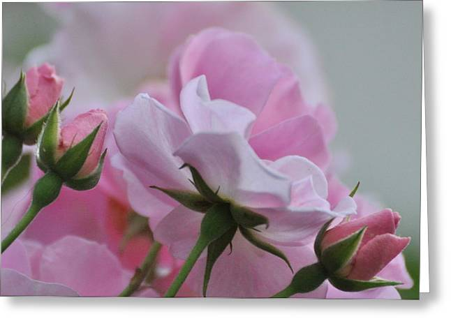 June Roses 1 Greeting Card by Gerald Hiam