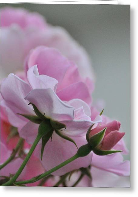 June Roses 2 Greeting Card by Gerald Hiam