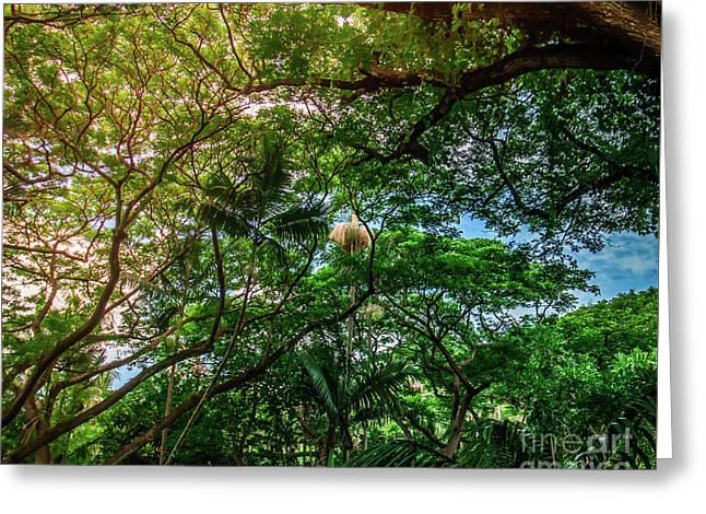 Jungle Canopy Kauai Hawaii Greeting Card by Blake Webster