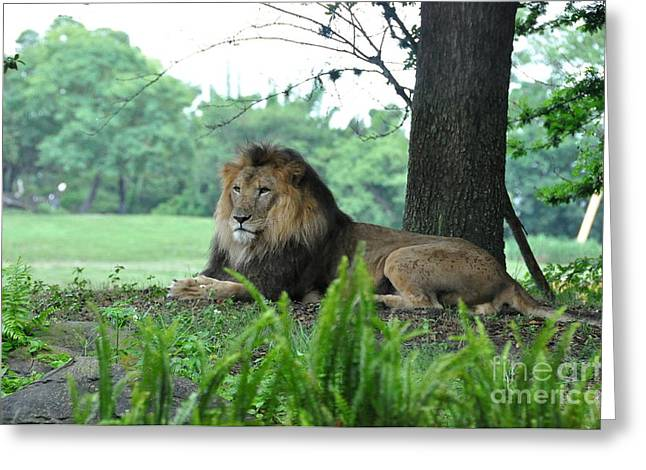 Greeting Card featuring the photograph Jungle King by John Black