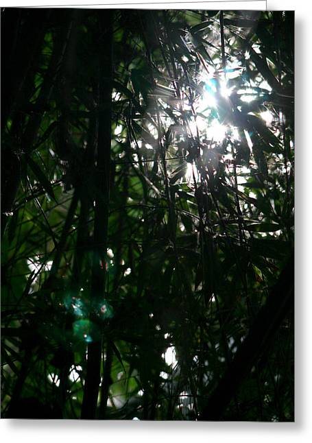 Jungle Light Greeting Card by Brad Scott