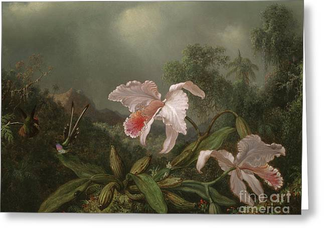 Jungle Orchids And Hummingbirds, 1872  Greeting Card