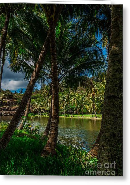 Jungle River Palms Kauai Greeting Card