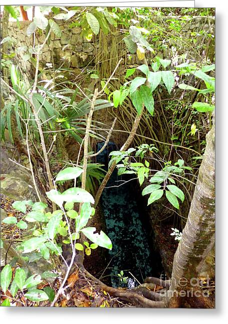 Greeting Card featuring the photograph Jungle Stream by Francesca Mackenney
