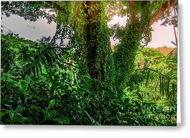 Jungle Vines Kauai Hawaii Greeting Card by Blake Webster