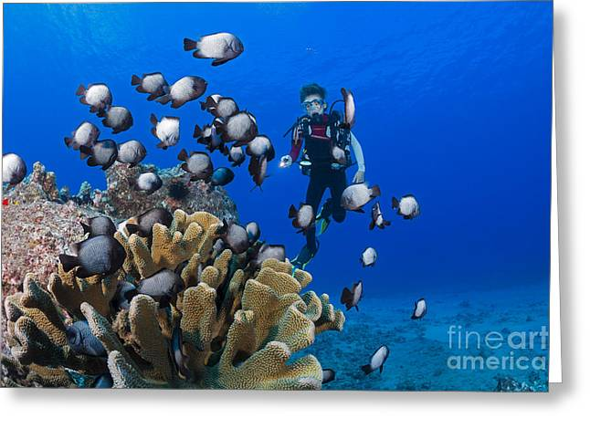 Junior Certified Scuba Diver Greeting Card by Dave Fleetham