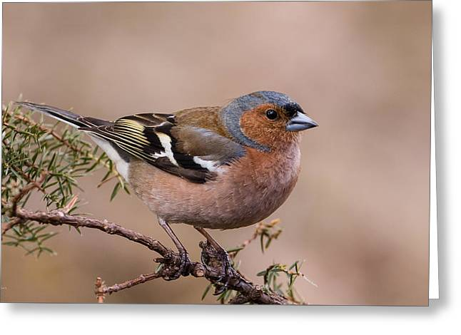 Juniper Bird Greeting Card