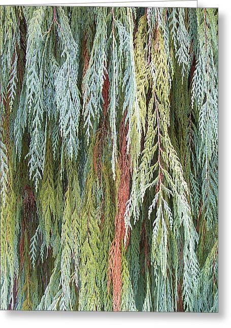 Juniper Leaves - Shades Of Green Greeting Card by Ben and Raisa Gertsberg