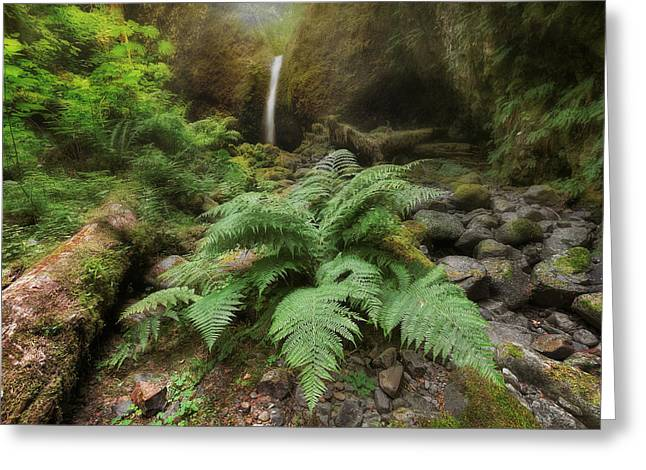 Jurassic Forest Greeting Card by David Gn
