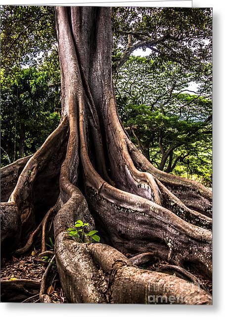 Jurassic Park Tree Roots Greeting Card