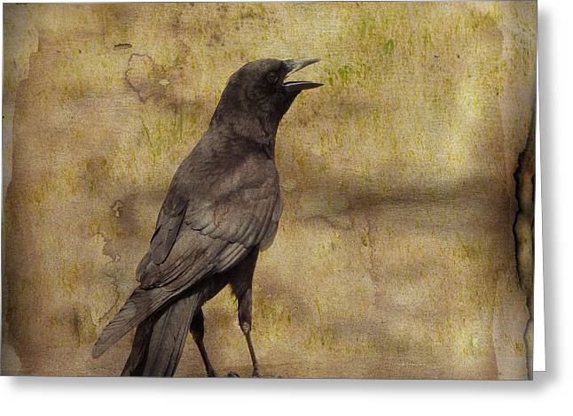 Just A Crow  Greeting Card