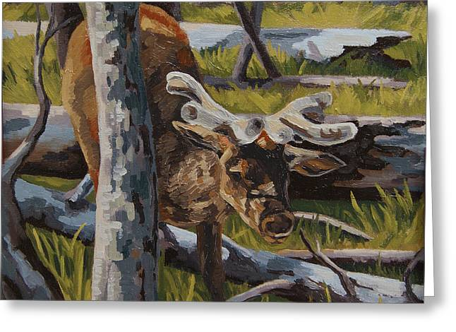 Greeting Card featuring the painting Just A Peek by Erin Fickert-Rowland