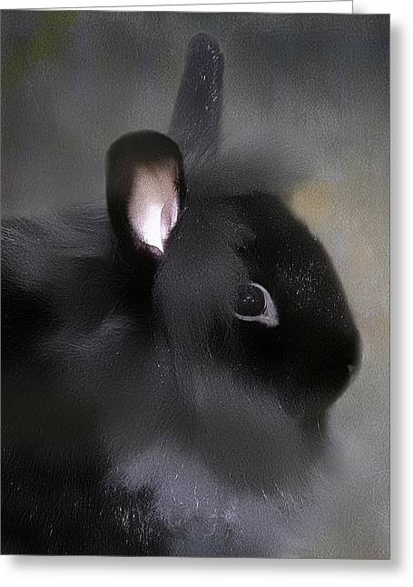 Greeting Card featuring the photograph Just A Rabbit by Gary Smith