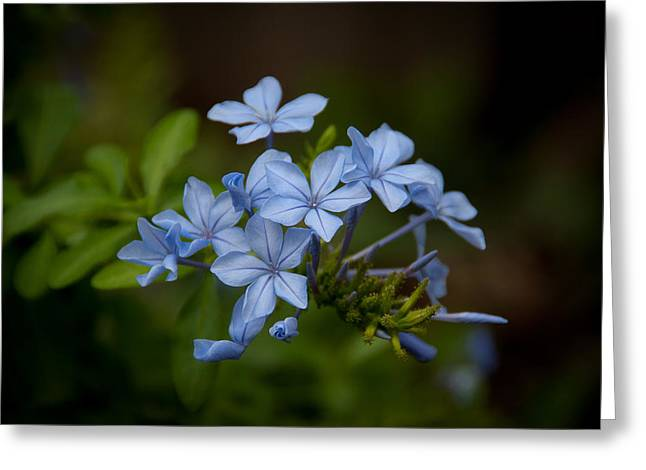 Greeting Card featuring the photograph Just A Touch Of Blue by Monte Stevens