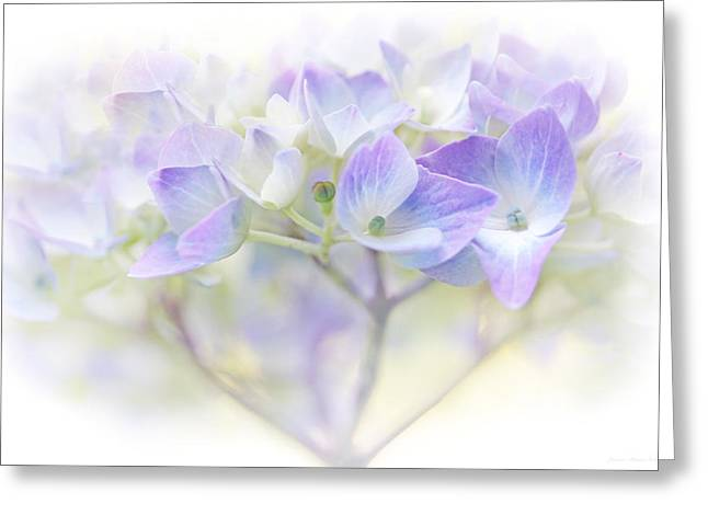 Just A Whisper Hydrangea Flower Greeting Card by Jennie Marie Schell