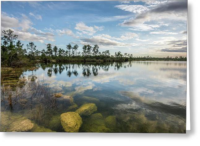 Just Below In The Everglades Greeting Card