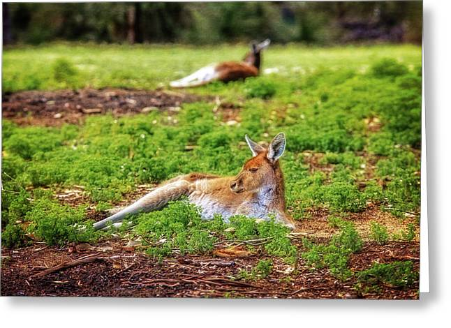 Just Chillin, Yanchep National Park Greeting Card