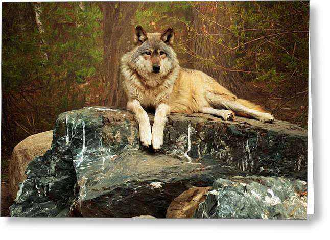 Greeting Card featuring the photograph Just Chilling by Susan Rissi Tregoning
