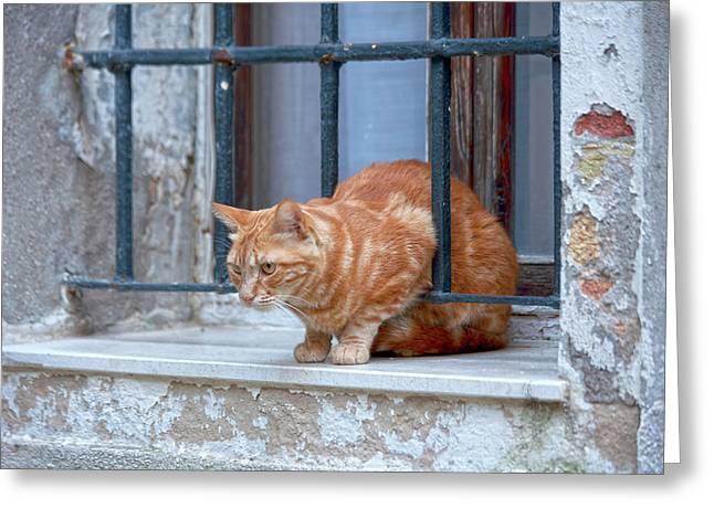 Venecia Greeting Cards - Just curious cat Greeting Card by Heiko Koehrer-Wagner