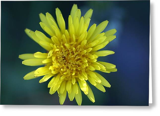 Just Dandy Greeting Card by Patricia M Shanahan