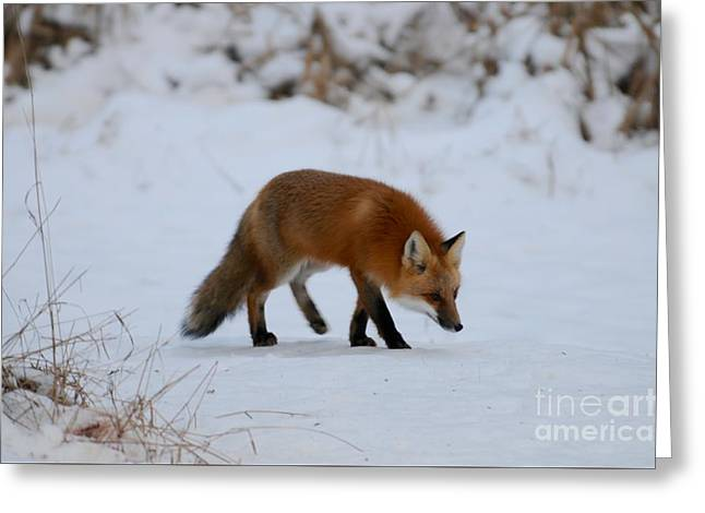 Just Hunting For Breakfast Greeting Card by Sandra Updyke