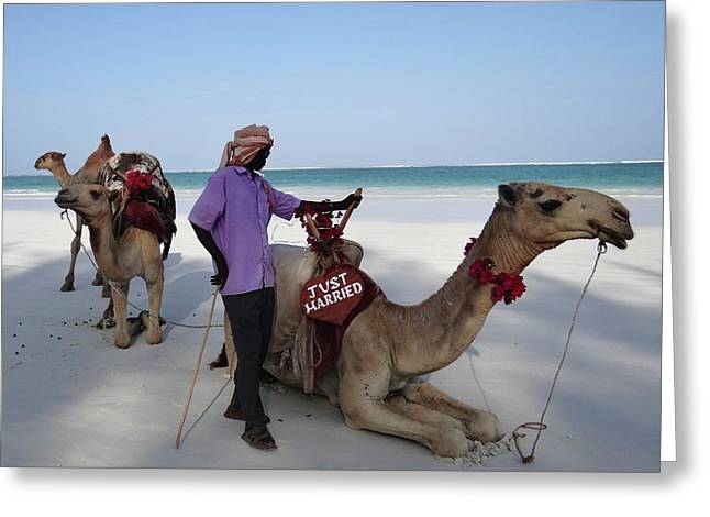 Just Married Camels Kenya Beach 2 Greeting Card