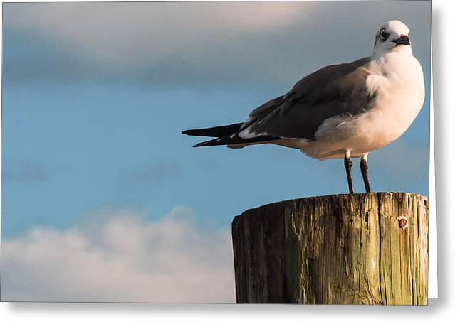 Just Standing On The Dock Greeting Card by Phillip Burrow