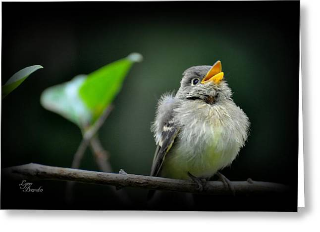 Juvenile Flycatcher Greeting Card by Lynn Bawden