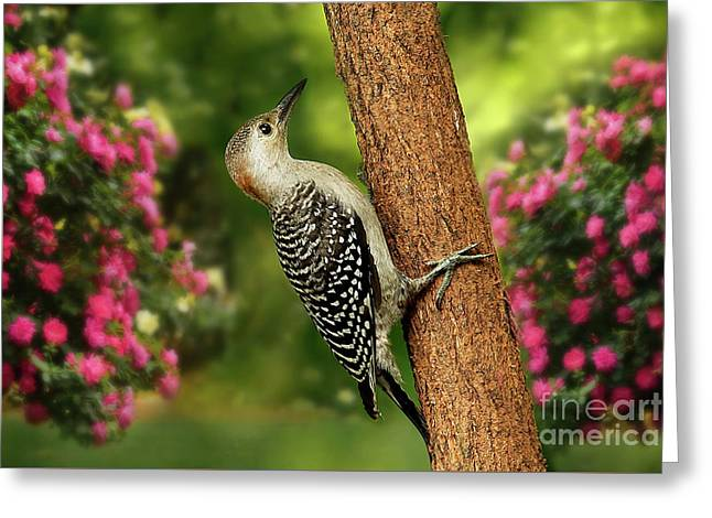 Greeting Card featuring the photograph Juvenile Red Bellied Woodpecker by Darren Fisher