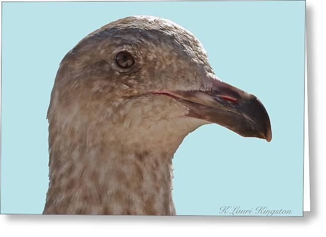 Juvenile Western Gull Bird Greeting Card