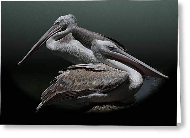 Juxtaposition - Pelicans Greeting Card