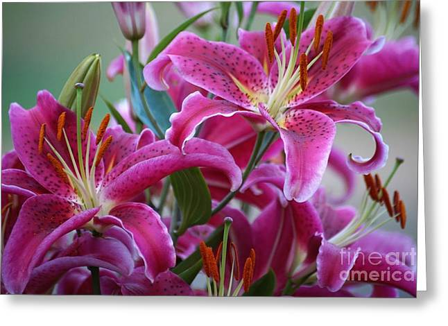 K And D Lilly 4 Greeting Card