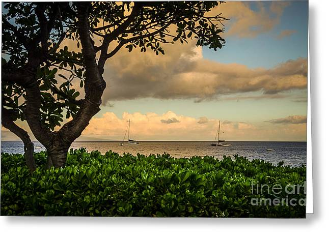 Greeting Card featuring the photograph Ka'anapali Plumeria Tree by Kelly Wade