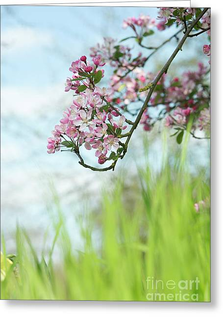 Kaido Crabapple Greeting Card