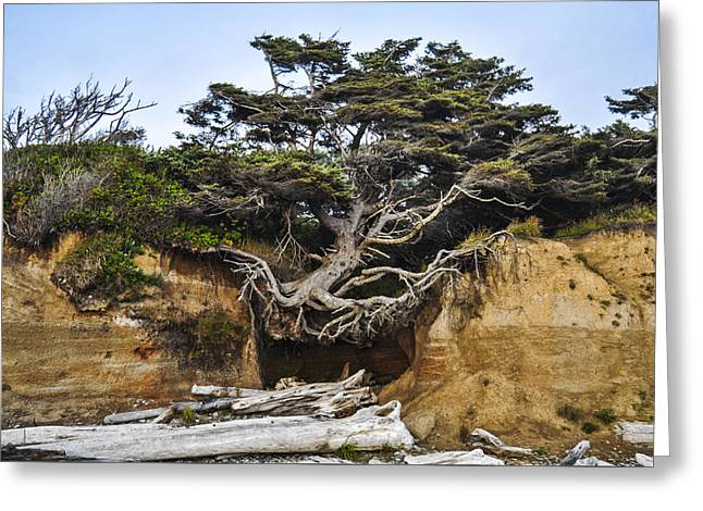 Kalaloch Hanging Tree Greeting Card